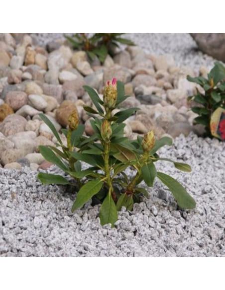 """ Taškuota - aguona "" granito skalda dekoratyvinė, frakcija 16-22mm"