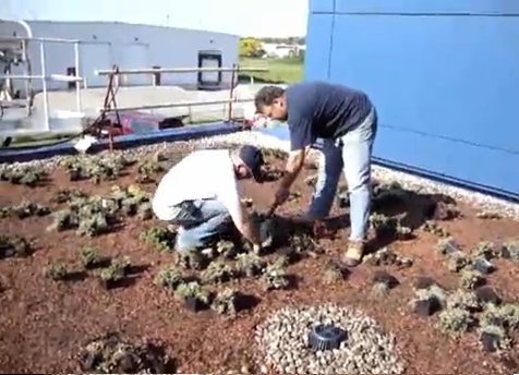 Apželdinti stogai naudojant perforuotą membraną su geotekstile